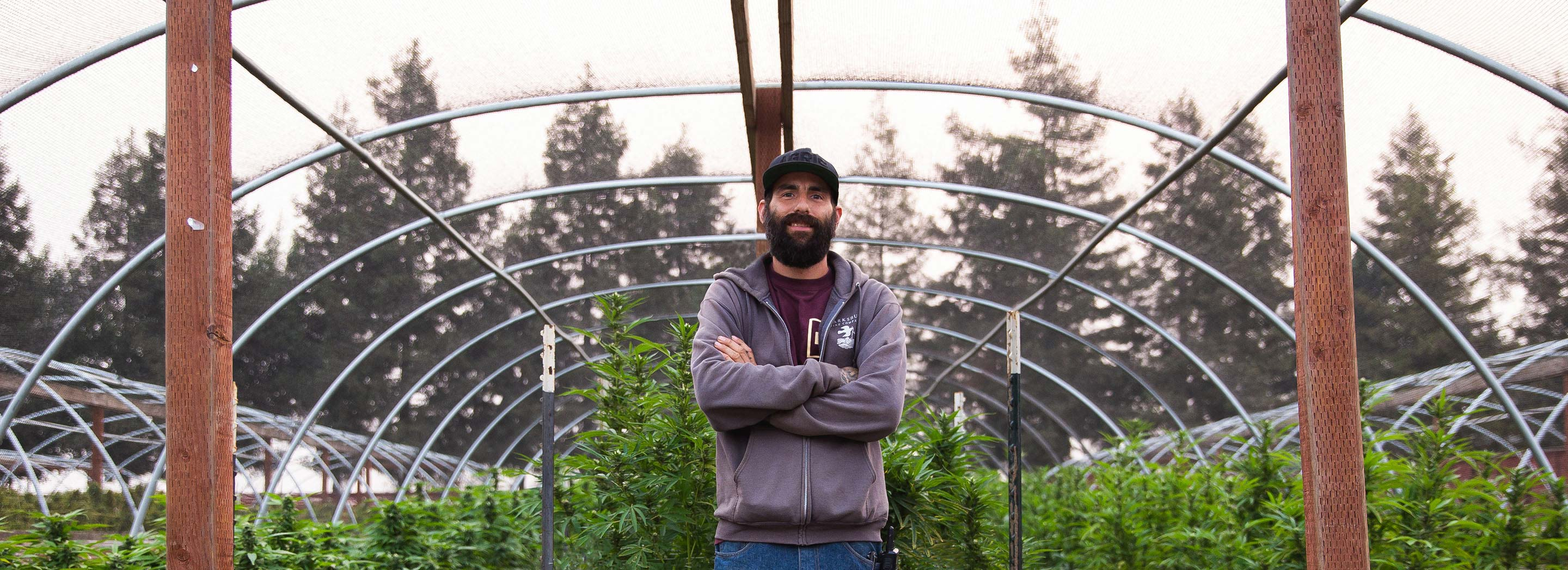 bearded farmer standing among his cannabis crops